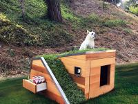 Doggy's Dreamhouse z pracowni Schicketanz